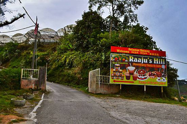 Raju Hill Strawberry Farm Cameron Highland Image
